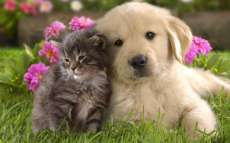 Can I adopt a Dog or Cat in Dubai UAE?